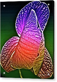 Coloring And Imagining Acrylic Print by Gwyn Newcombe