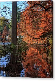 Acrylic Print featuring the photograph Colors And Reflections At Trap Pond by Robert Pilkington