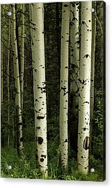 Acrylic Print featuring the photograph Colors And Texture Of A Forest Portrait by James BO Insogna