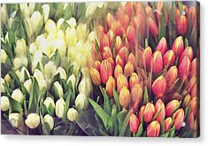 Colors In Gauze Acrylic Print by JAMART Photography