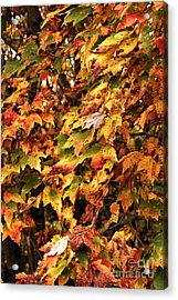 Colors Of Autumn Acrylic Print by John Rizzuto