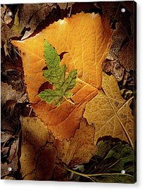 Acrylic Print featuring the photograph Colors Of Autumn by Marie Leslie