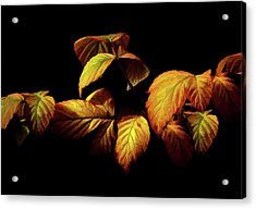 Acrylic Print featuring the painting Colors Of Autumn Memories  by David Dehner