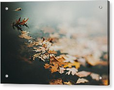 Colors Of Fall Acrylic Print by Tracy  Jade