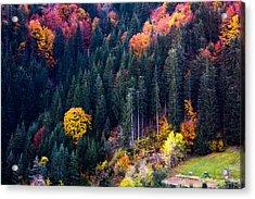 Colors Of Rhodope Acrylic Print