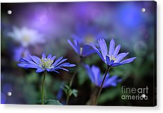Colors Of Spring Acrylic Print