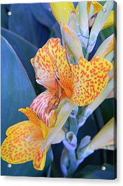 Colors Of The Canna Lily Acrylic Print by Warren Thompson