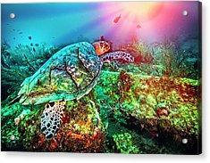 Acrylic Print featuring the photograph Colors Of The Sea In Lights by Debra and Dave Vanderlaan