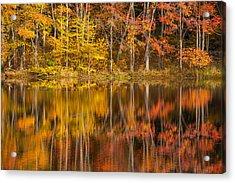 Colors Of The Season Acrylic Print by Karol Livote
