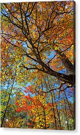 Colors On High Acrylic Print