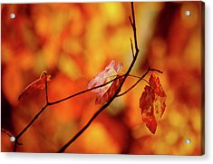 Acrylic Print featuring the photograph Colors by Robert Geary