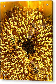 Colour Of Honey Acrylic Print