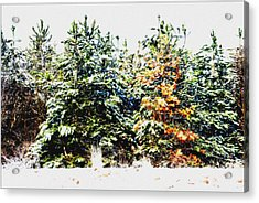 Coloured Trees  Acrylic Print