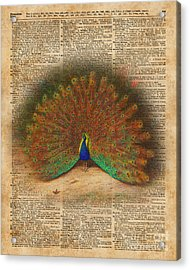 Colourful Beautiful Peacock Vintage Dictionary Art Acrylic Print by Jacob Kuch