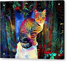 Colourful Calico Acrylic Print