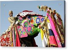 Colourful Elephants At Elephant Festival Acrylic Print by John Sones