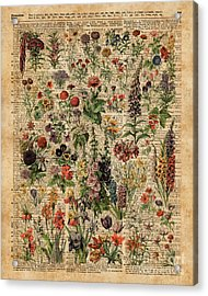 Colourful Meadow Flowers Over Vintage Dictionary Book Page  Acrylic Print by Jacob Kuch