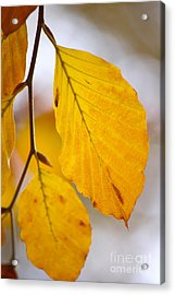 Colours Of Autumn Acrylic Print