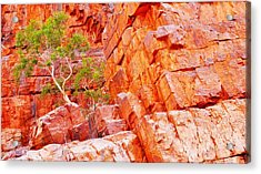 Colours Of Ormiston Gorge, Northern Territory Acrylic Print
