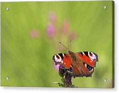 Colours Of Summer Acrylic Print