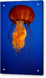 Colours Of The Jelly Fish Acrylic Print by Naman Imagery