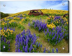 Columbia Hills Wildflowers Acrylic Print