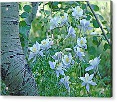 Columbine Meadow Acrylic Print