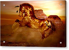 Comanche Acrylic Print by Valerie Anne Kelly