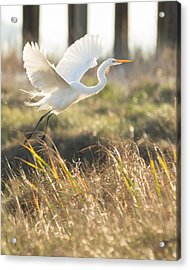 Acrylic Print featuring the photograph Come Fly With Me by Julie Andel