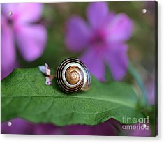 Come Out Of Your Shell Acrylic Print