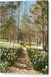 Come Walk Among The Daffodils Acrylic Print