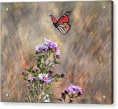 Comeing In For A Landing Acrylic Print by James Steele