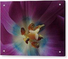 Come, Pollinate Me Acrylic Print