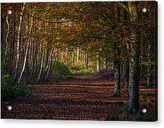 Acrylic Print featuring the photograph Comfort In These Woods by Odd Jeppesen