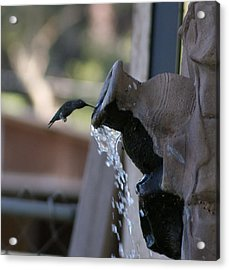 Coming In For Water Acrylic Print