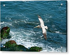 Coming In Acrylic Print by Sandra Bronstein