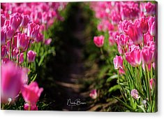 Coming Up Pink Acrylic Print by Nick Boren