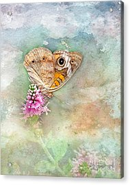 Acrylic Print featuring the photograph Common Buckeye by Betty LaRue