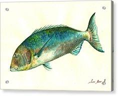 Common Dentex Fish Painting Acrylic Print
