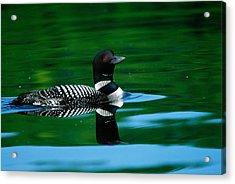 Common Loon In Water, Michigan, Usa Acrylic Print
