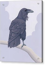 Common Raven Acrylic Print by Nathan Marcy