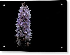 Common Spotted Orchid Acrylic Print