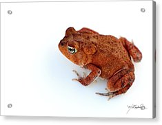 Common Yard Toad Acrylic Print