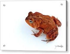 Common Yard Toad Acrylic Print by Melissa Wyatt