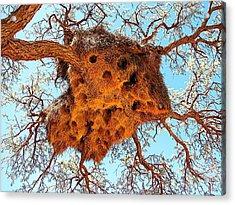 Community Weaver's Nest Acrylic Print