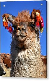 Acrylic Print featuring the photograph Como Se Llama by Skip Hunt