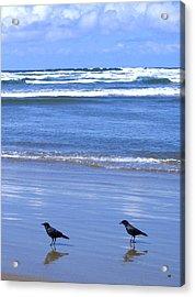 Companion Crows Acrylic Print