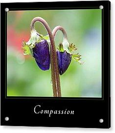 Compassion 1 Acrylic Print