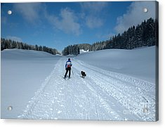 Competitor In The Belgium Sleigh Dog Championships Acrylic Print by Neil Harrison