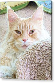 Complete Satisfaction Acrylic Print by Judy Via-Wolff